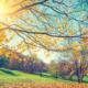 Depurazione in autunno